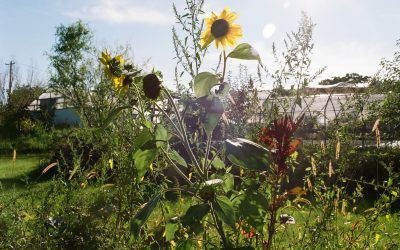 Walkabout Permaculture August 3-6